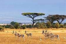 levné letenky Keňa